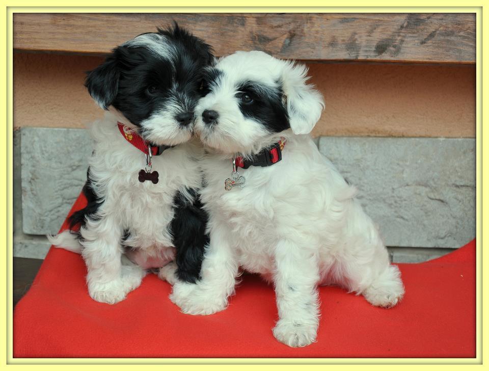 Chomi in Zuza sedi