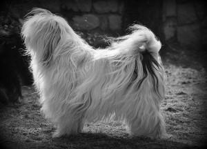 Sami black and white