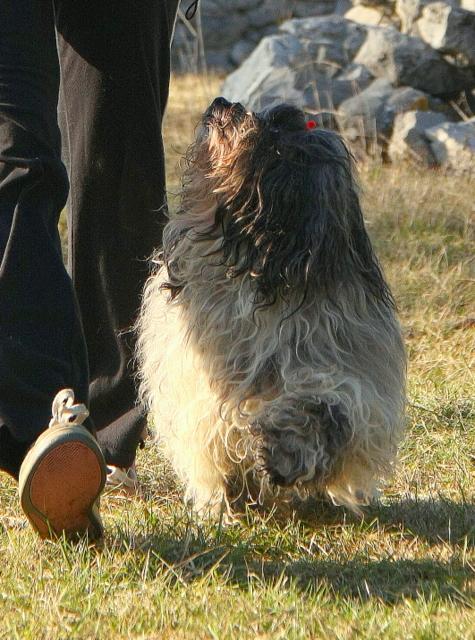 najboljsi pes