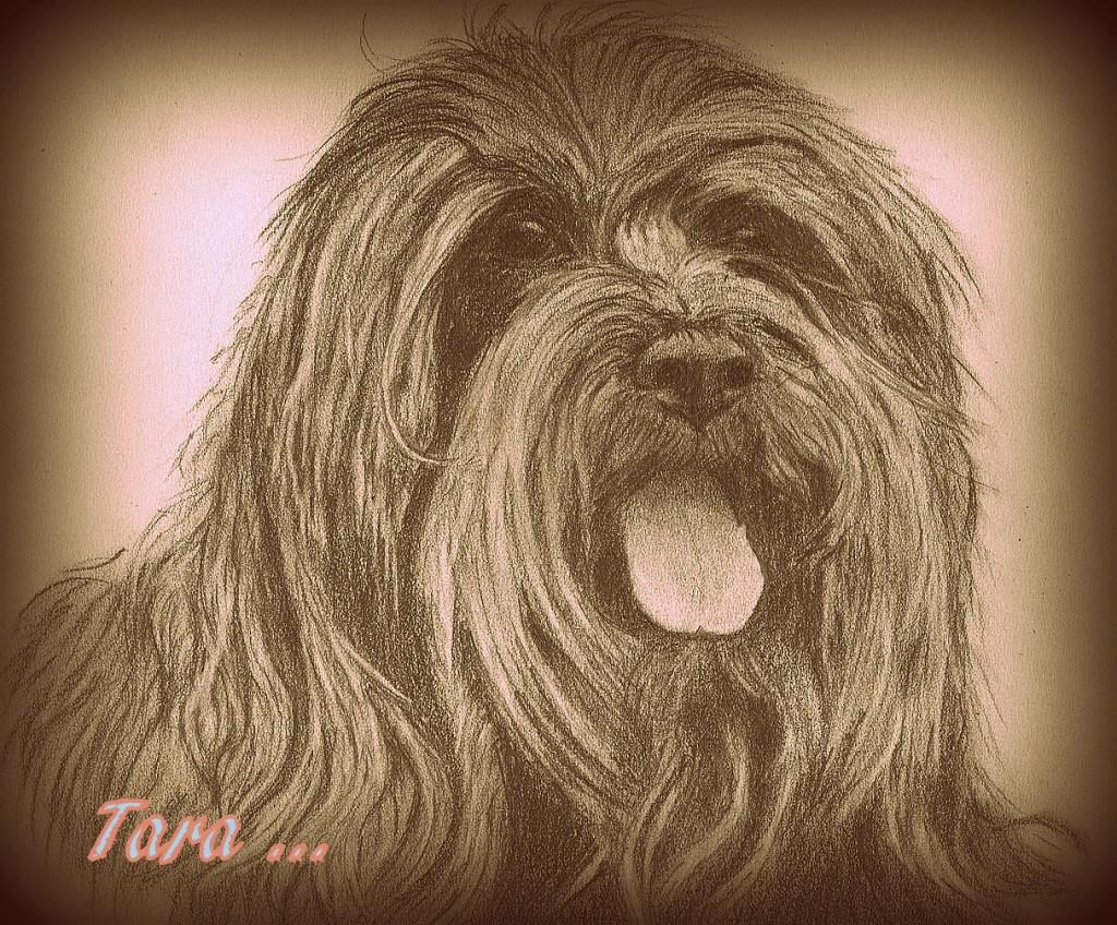 Tarica 001-001