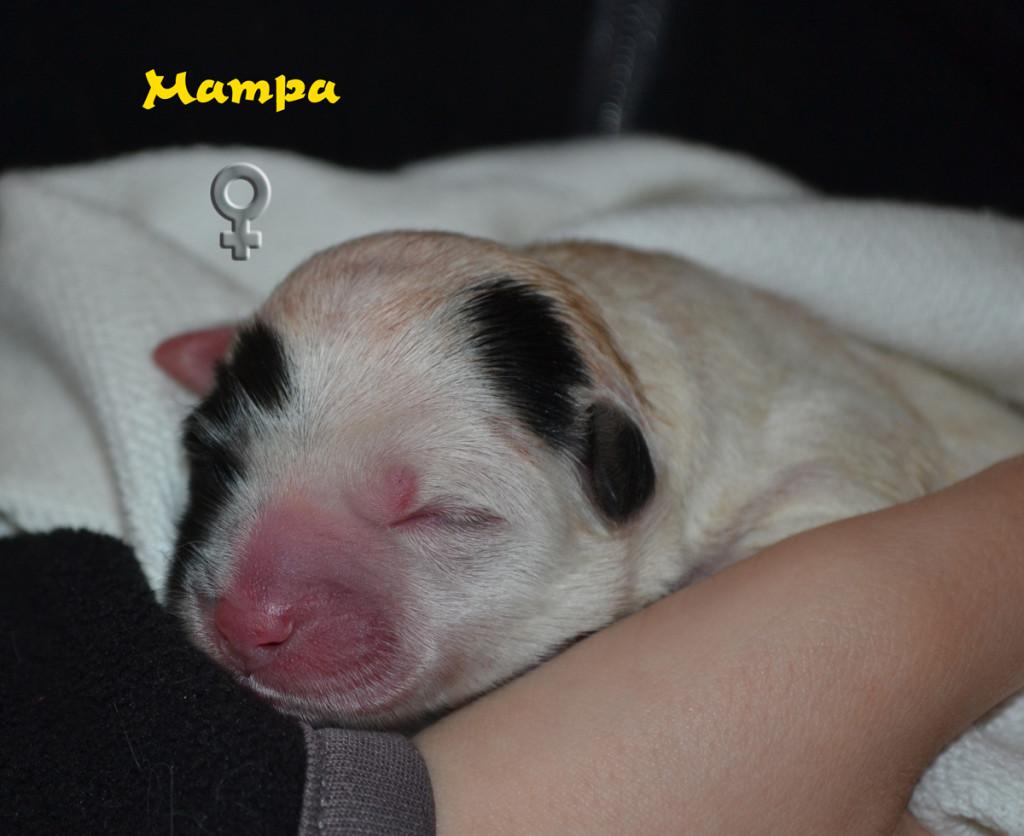 Mampa1