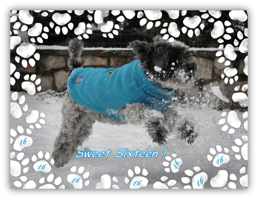 Nanda na snegu dec2014