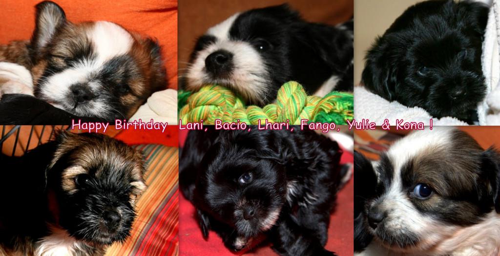 L 6 rojstni dan