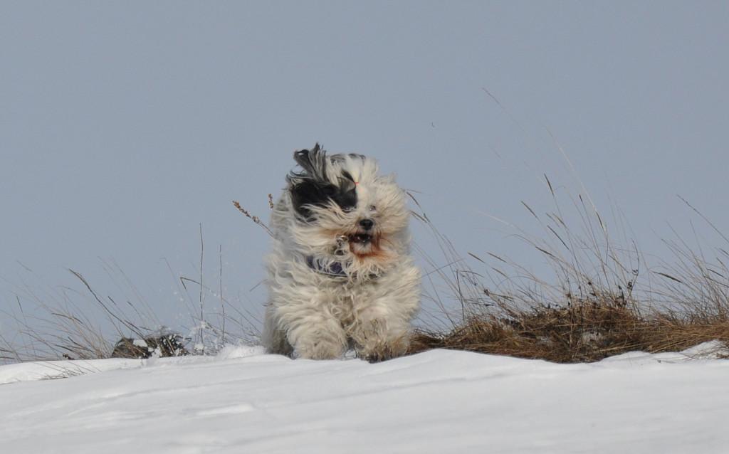 Sami 2 sneg vrem15