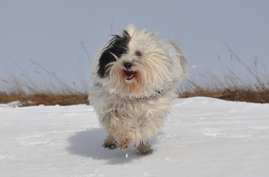 Sami3 sneg vrem15